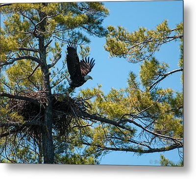Metal Print featuring the photograph Taking Flight by Brenda Jacobs