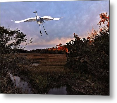 Metal Print featuring the photograph Taking Flight by Laura Ragland