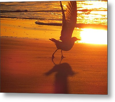 Metal Print featuring the photograph Taking Flight by Nikki McInnes