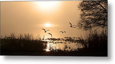 Taking Flight Metal Print by Peg Urban