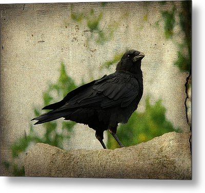 Blackbird Is Taking It All In Metal Print by Gothicrow Images