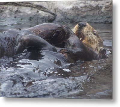 Metal Print featuring the photograph Taking It Easy by Christine Drake