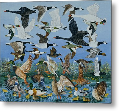 Taking Off Metal Print by Pat Scott