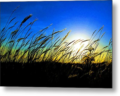Tall Grass Metal Print