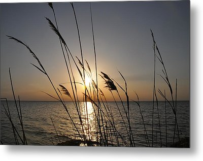 Tall Grass Sunset Metal Print