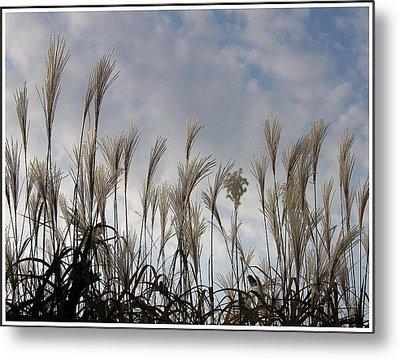 Tall Grasses And Blue Skies Metal Print