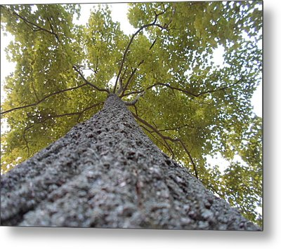 Tall Tree Metal Print by Jenna Mengersen
