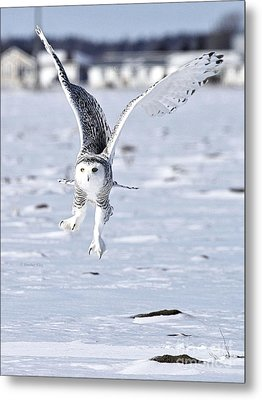 Talonted Metal Print by Heather King