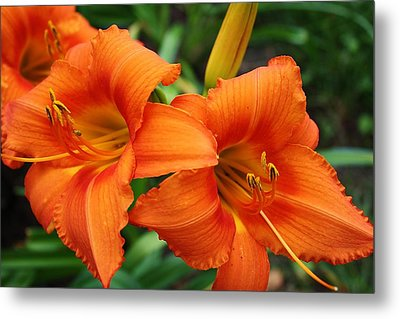 Tangerine Lush Daylily 2 Metal Print by Bruce Bley