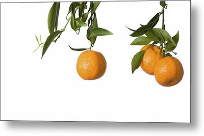 Tangerines On Branch Metal Print by Anna Kaminska