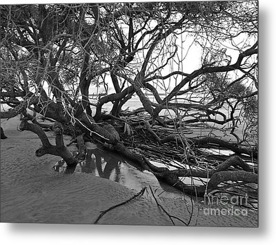 Tangle Metal Print by M West