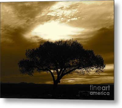 Taos Tree Metal Print
