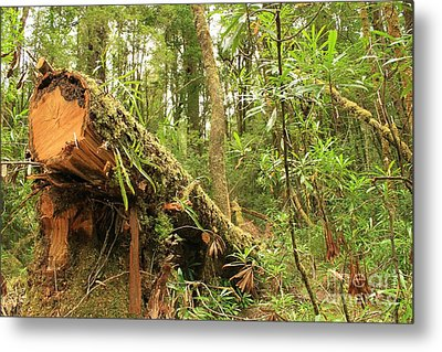Tasmanian Rain Forest All Profits Go To Hospice Of The Calumet Area Metal Print