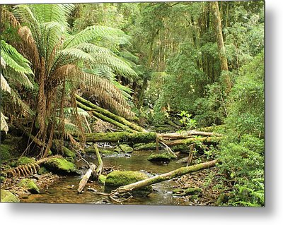 Tasmanian Rain Forest River All Profits Go To Hospice Of The Calumet Area Metal Print