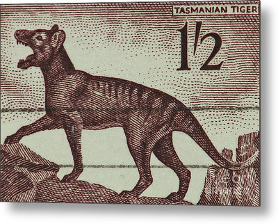 Tasmanian Tiger Vintage Postage Stamp Metal Print by Andy Prendy