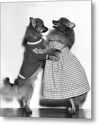 Teaching A Young Dog New Trick Metal Print
