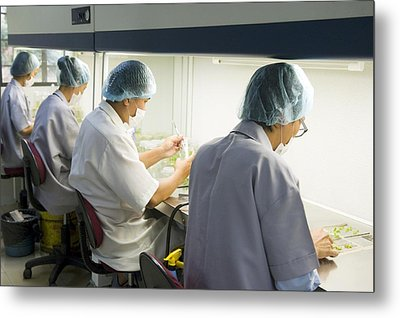 Teak Cloning, Malaysia Metal Print by Science Photo Library