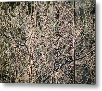Metal Print featuring the photograph Technicolour Frost by Brian Boyle
