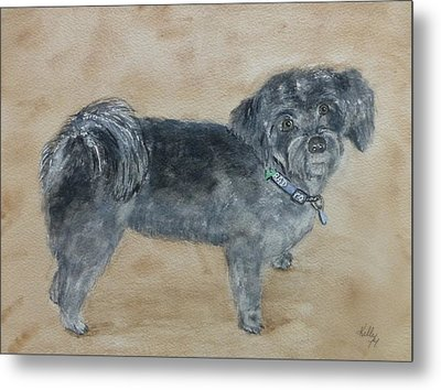 Metal Print featuring the painting Maltese Puppy  by Kelly Mills