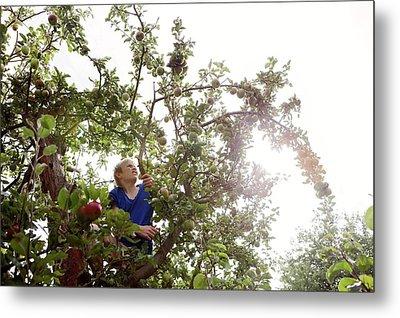 Teenage Boy Climbing An Apple Tree Metal Print