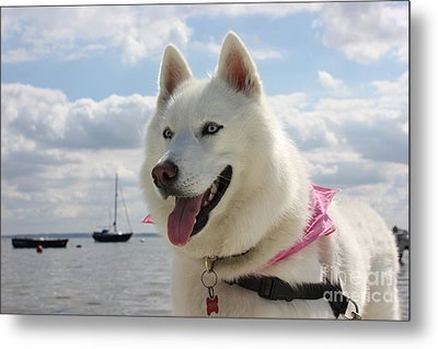 Tehya Metal Print by Vicki Spindler
