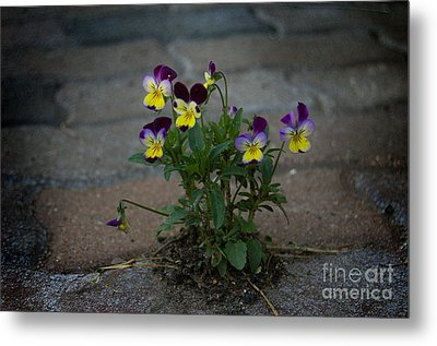 Tenacity Comes In Small Packages Metal Print