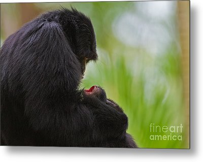 Tender Moments Metal Print by Ashley Vincent