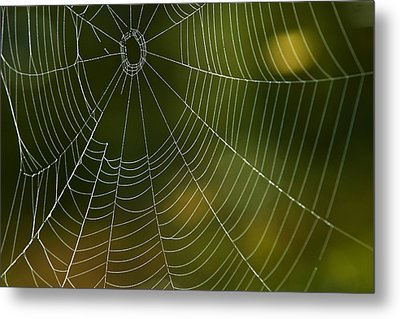 Tender Web Metal Print by Christina Rollo