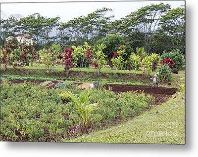 Tending The Land Metal Print by Suzanne Luft