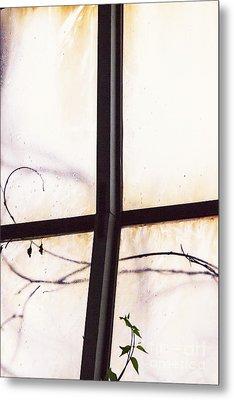 Tendrils Metal Print by Margie Hurwich