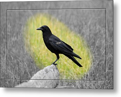 Tennessee Crow Metal Print