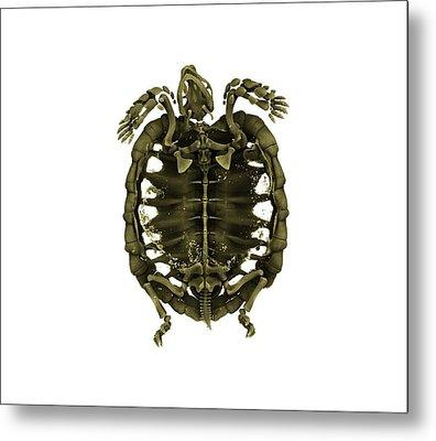 Tent Tortoise Metal Print