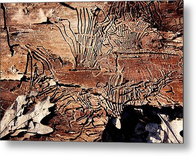 Termite Trails Metal Print