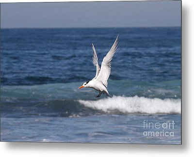 Tern In The Surf Metal Print by Ruth Jolly