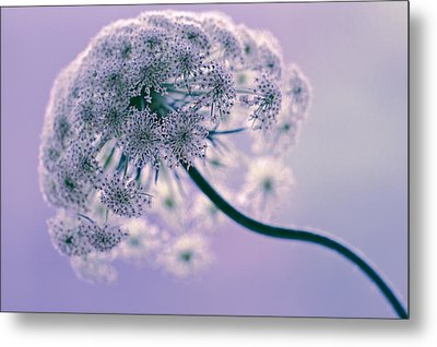 Tethered Metal Print by Annette Hugen
