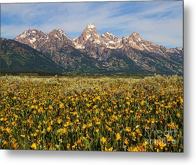 Tetons And Yellow Metal Print by Edward R Wisell