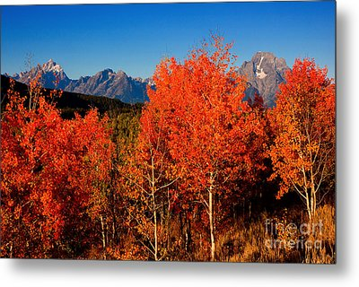 Metal Print featuring the photograph Tetons Colors Of Autumn by Aaron Whittemore