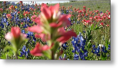 Texas Beauties Metal Print