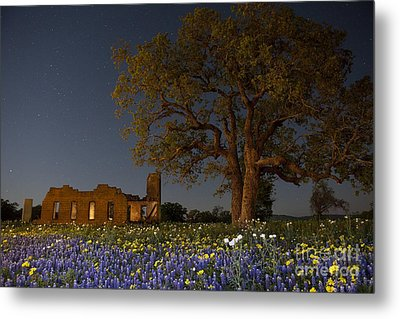 Texas Blue Bonnets At Night Metal Print