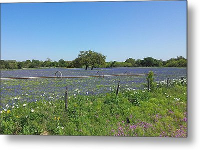 Texas Blue Bonnets Metal Print