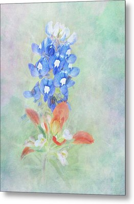 Texas Bluebonnet And Indian Paintbrush Metal Print by David and Carol Kelly