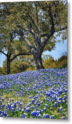 Texas Bluebonnet Hill Metal Print