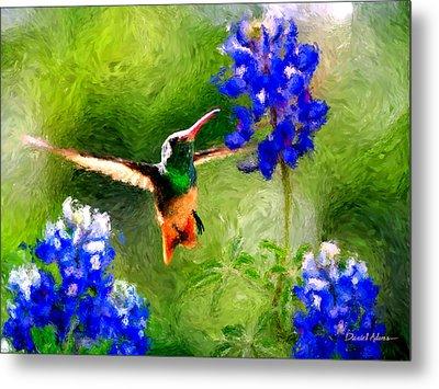 Da161 Texas Bluebonnet Hummingbird By Daniel Adams Metal Print