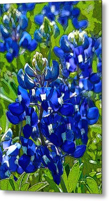 Texas Bluebonnets - Posterized Image Metal Print by Robert J Sadler