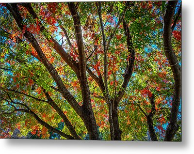 Metal Print featuring the photograph Texas Fall Glory by Ross Henton