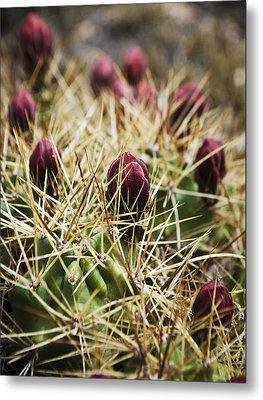 Texas Blooming Cactus Metal Print