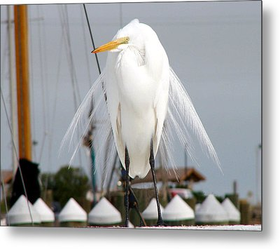 Metal Print featuring the photograph Texas Gulf Coast Great White Egret by Linda Cox