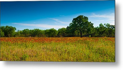 Texas Hill Country Meadow Metal Print
