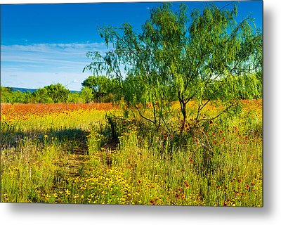 Texas Hill Country Wildflowers Metal Print