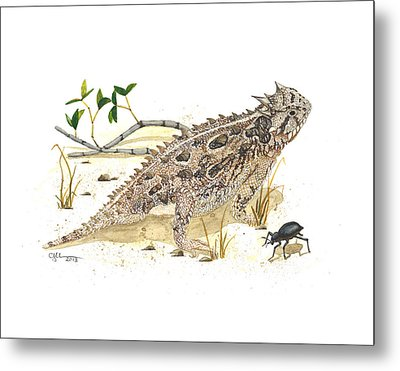 Texas Horned Lizard Metal Print by Cindy Hitchcock